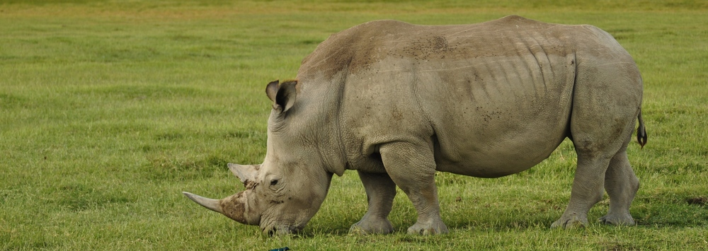 Essays on wildlife conservation