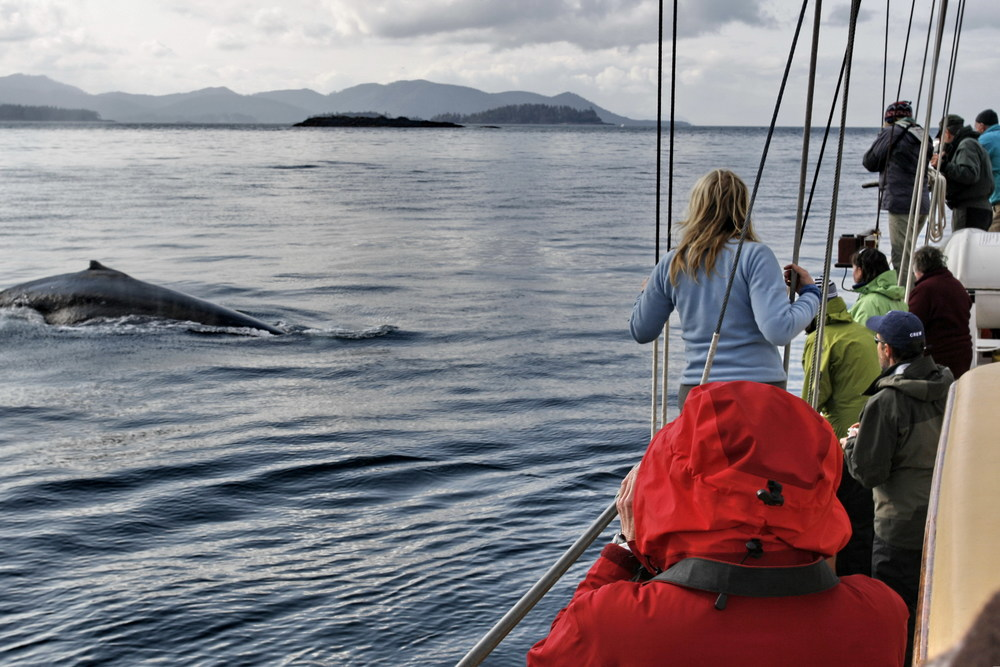 Whale watching from the Maple Leaf. Photo by Kevin J. Smith/Maple Leaf Adventures