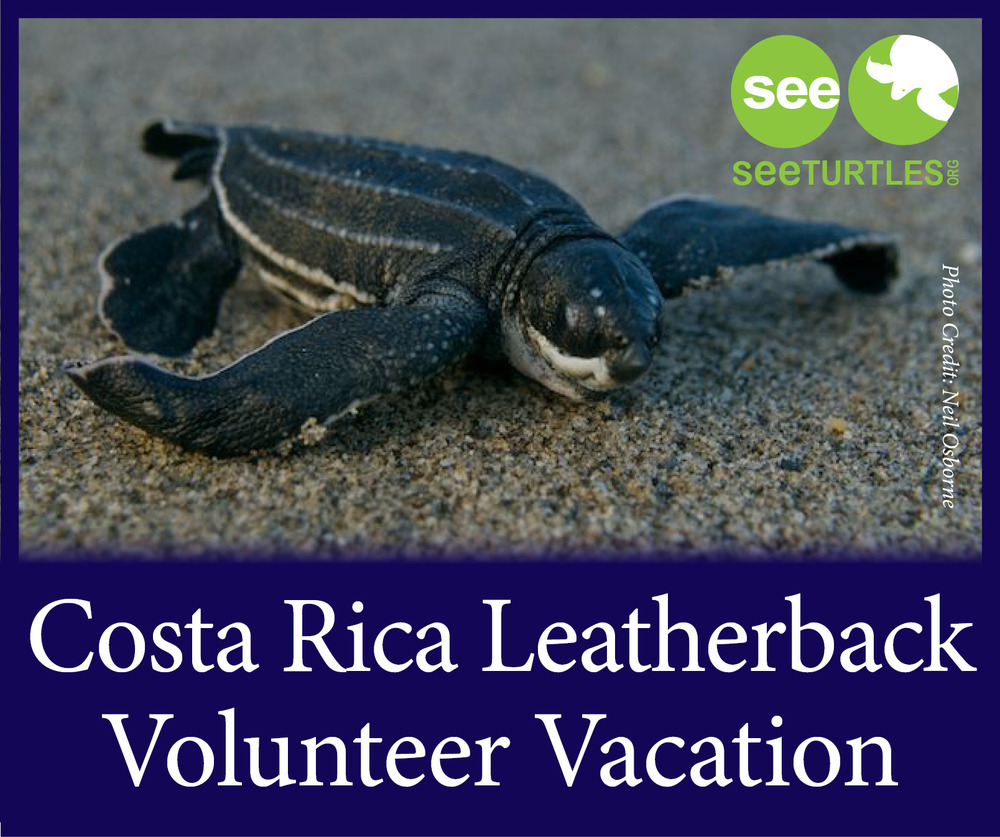 Costa Rica GREEN Turtle Trip 2.png
