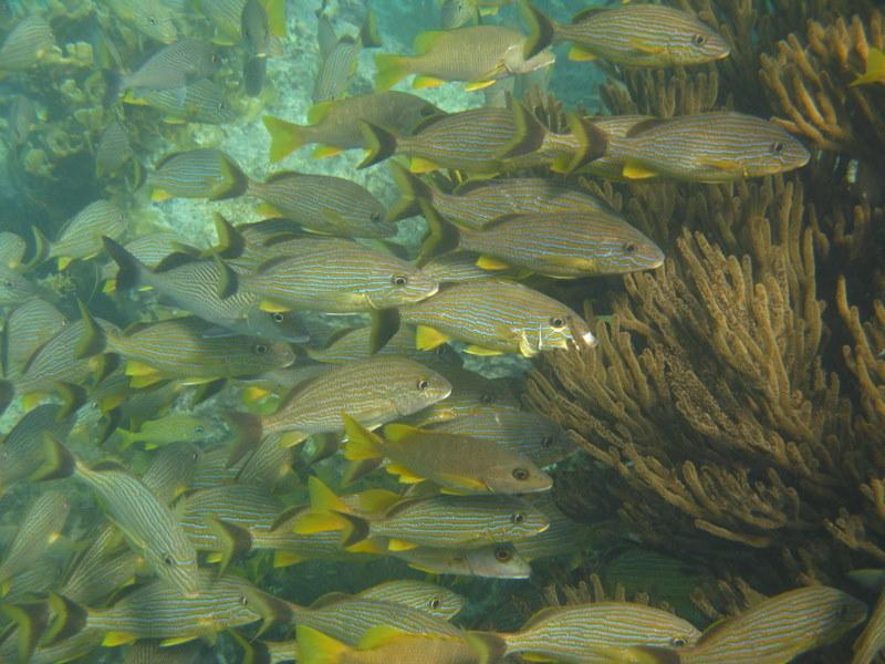 Snorkeling Isla Mujeres.JPG
