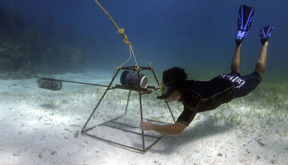 Underwater research.jpg
