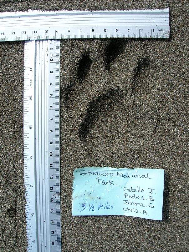 26. Volunteers take notes and measurements on jaguar prints.jpg