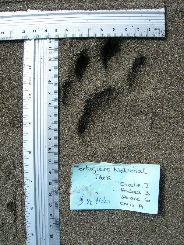 26. Volunteers take notes and measurements on jaguar prints.jpg