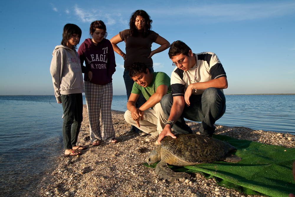 Net Worth: Baja Sea Turtle Conservation Travel