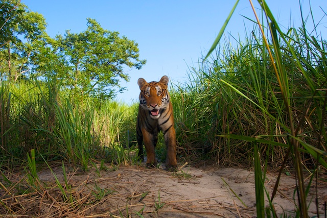 Crouching Tiger: India's National Parks