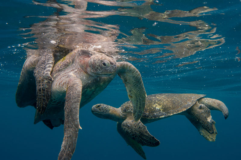 Return of the Black Turtle: Neil Osborne