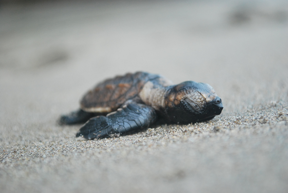 Central America's Forgotten Turtles
