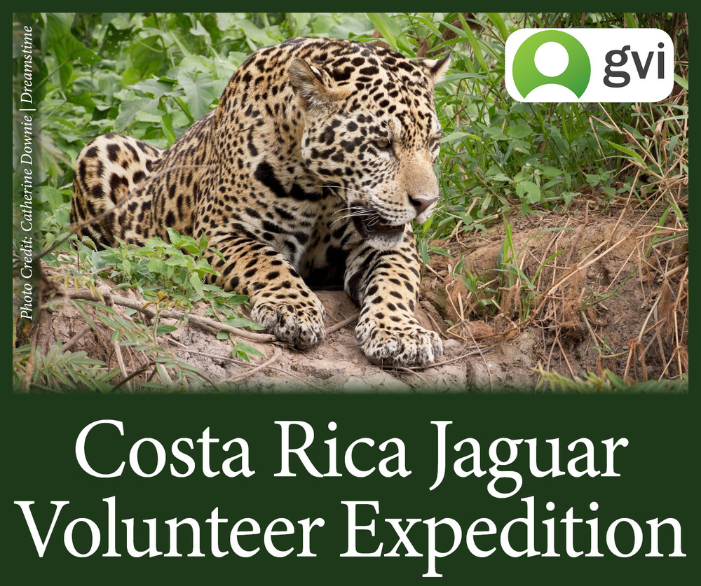 StW Costa Rica Jaguar Research GVI Edited.jpg