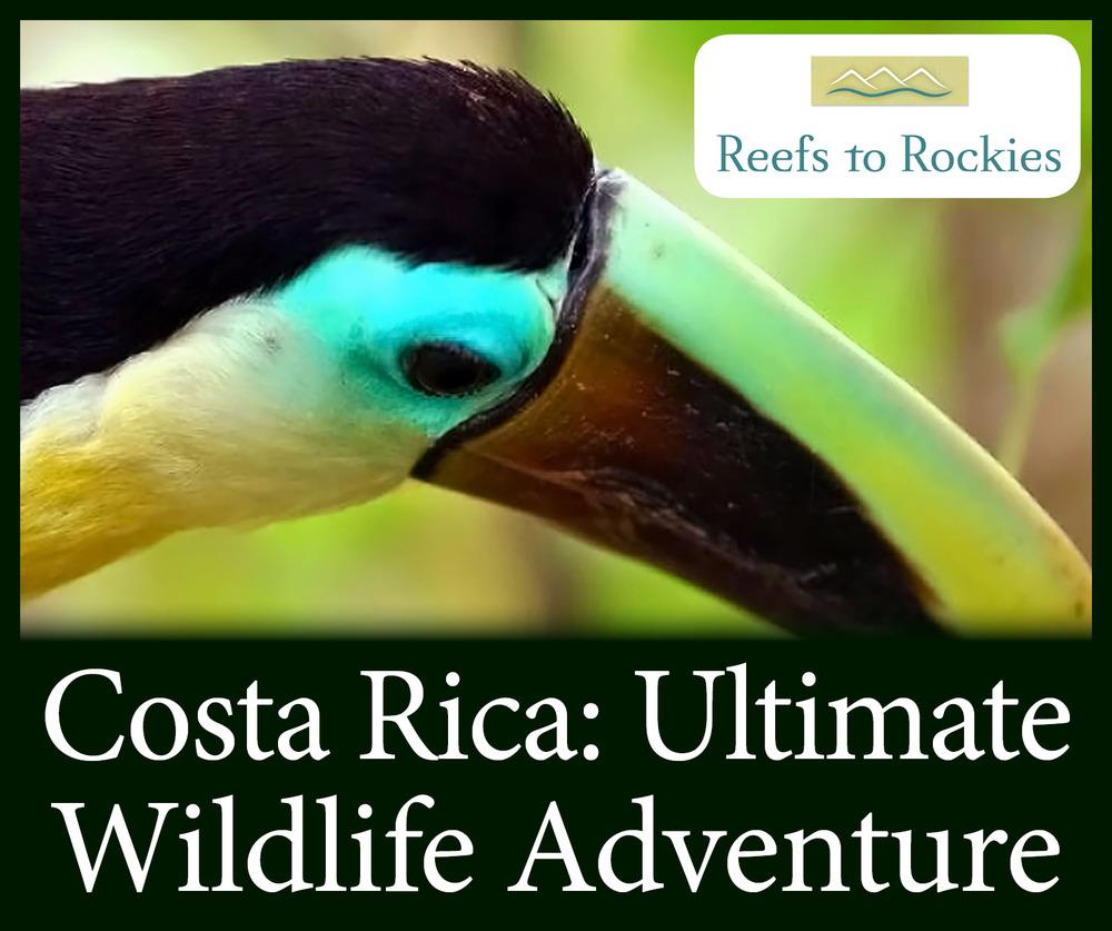 StW Costa Rica Ultimate Wildlife Adventure R2R Edited.jpg