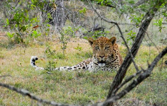 Photo Credit - Wildlife ACT