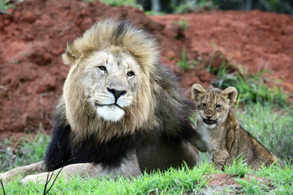 Photo Credit - Kariega Game Reserve