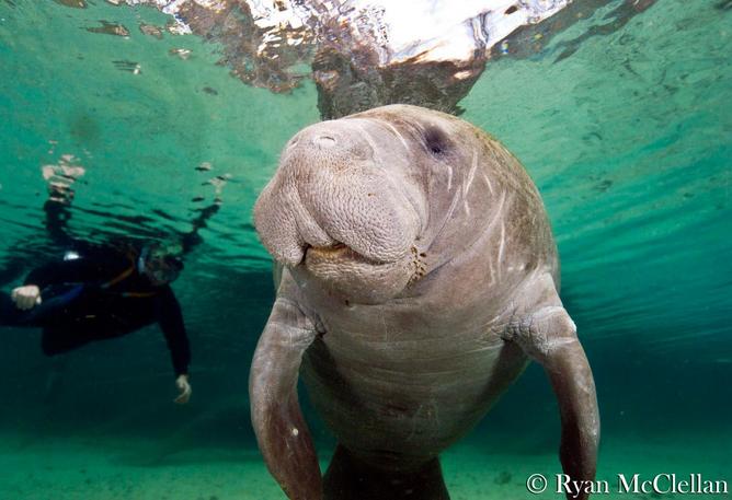 Photo credit: Ryan McClellan / Oceanic Society
