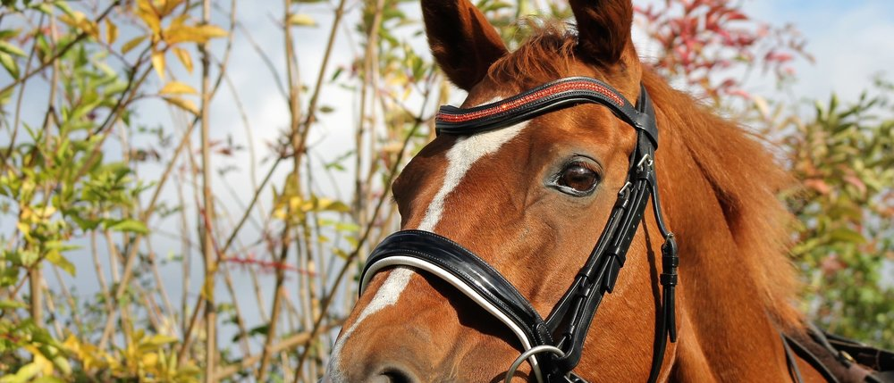 Autumn bridle colours