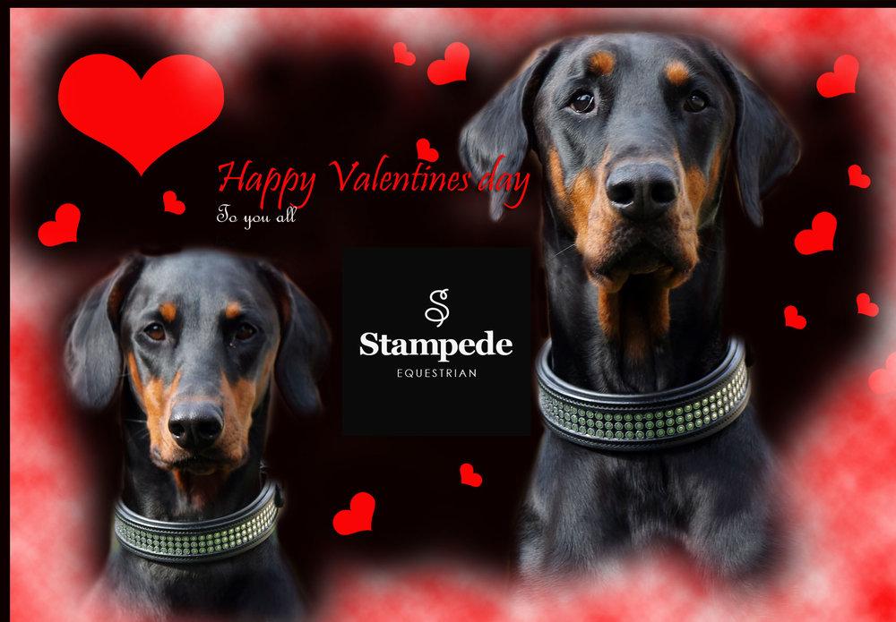 stampede-valentines.jpg