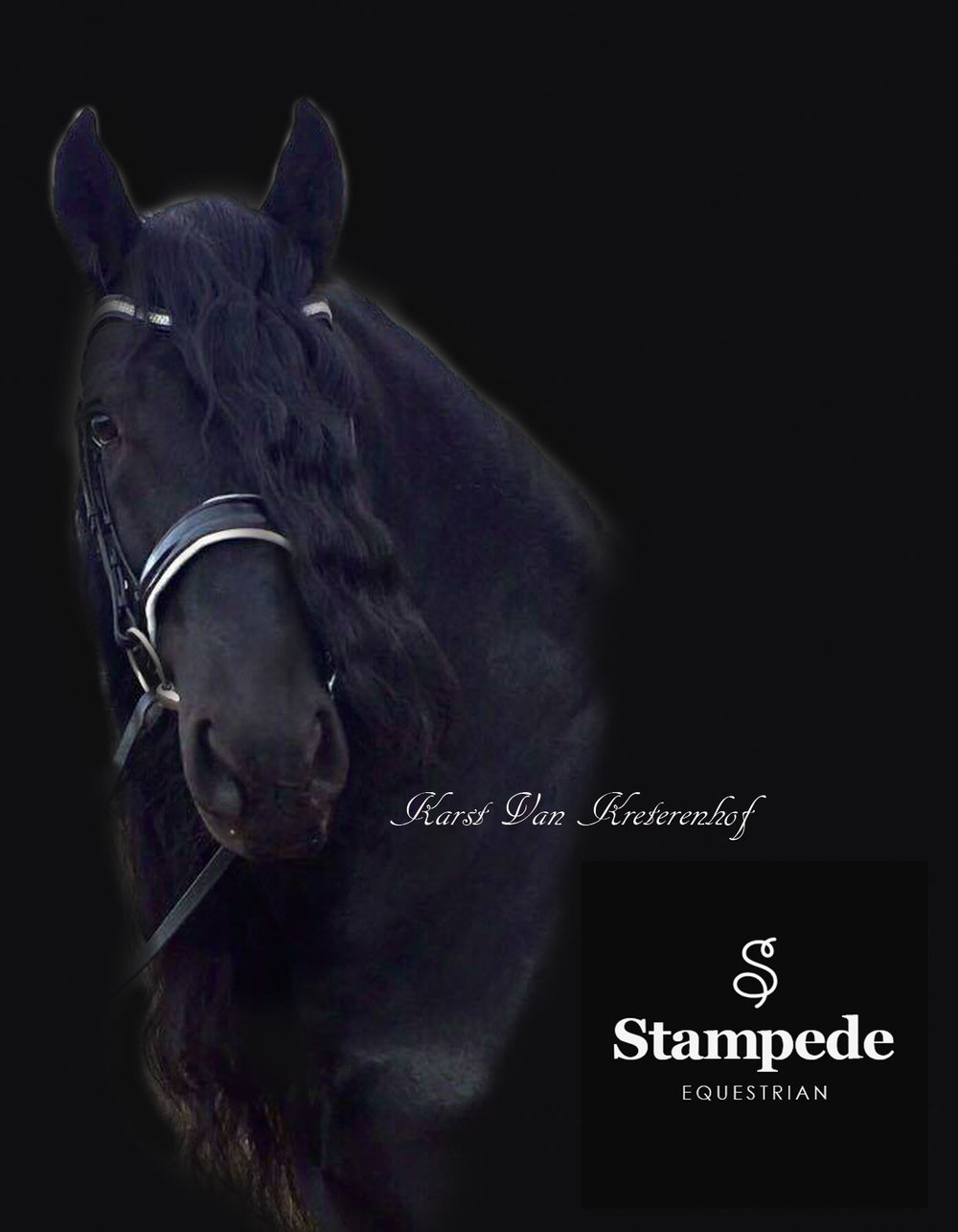black-stallion-kit-kat-1.jpg