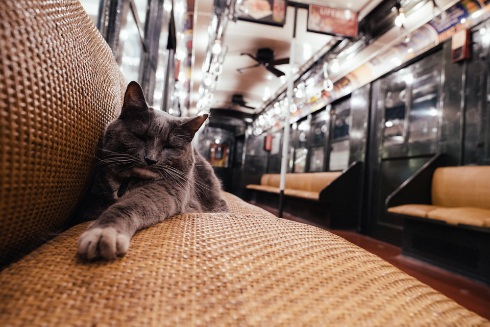 NYC Subway Cat