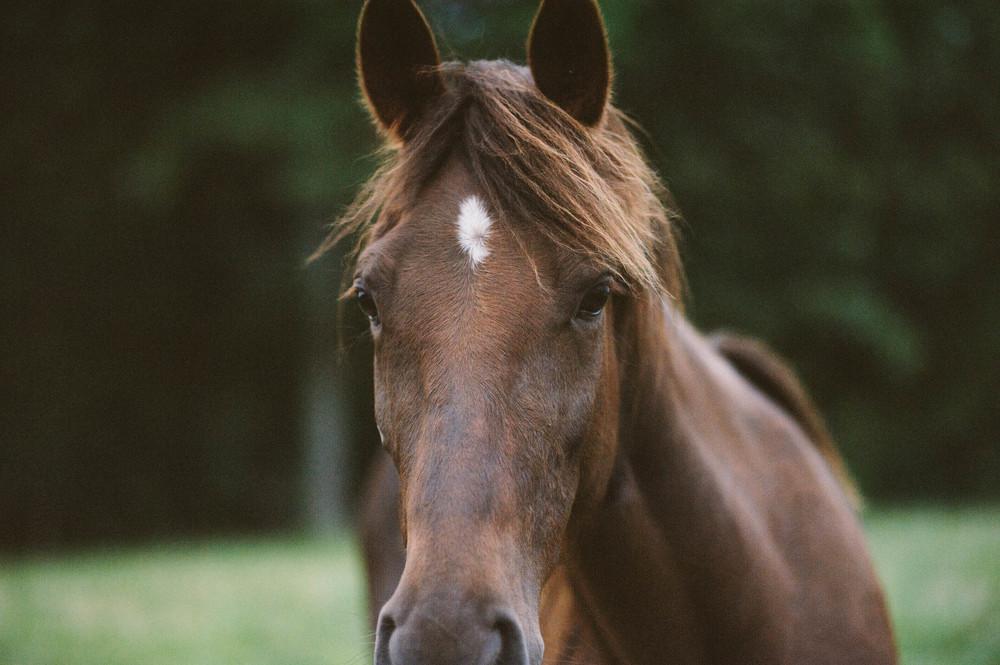 horses (2 of 7).jpg