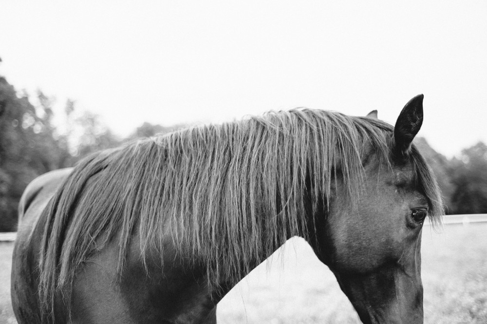 horses (5 of 8).jpg