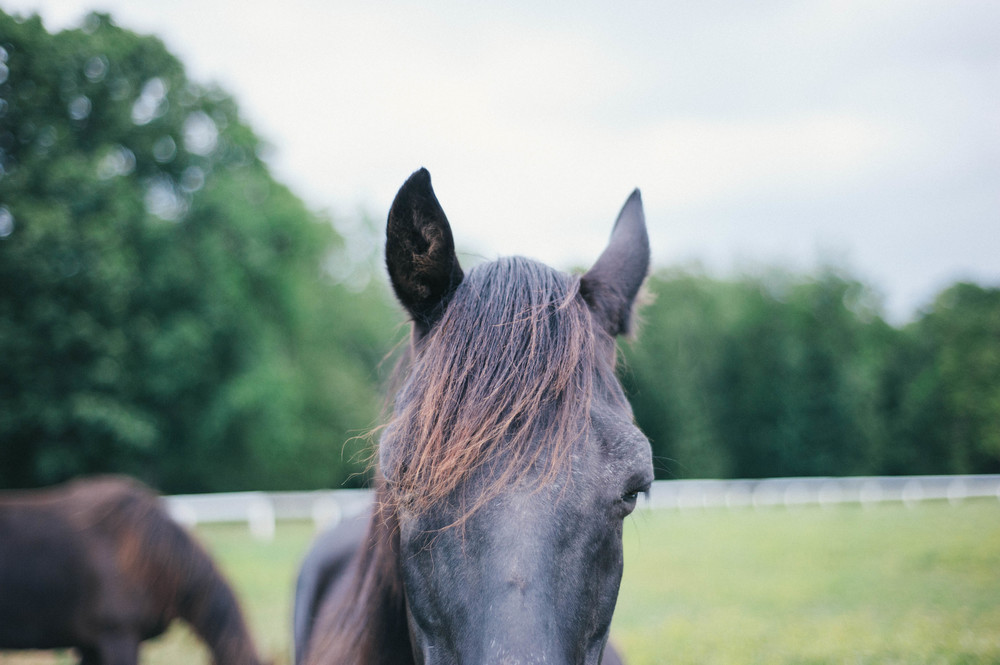horses (8 of 8).jpg