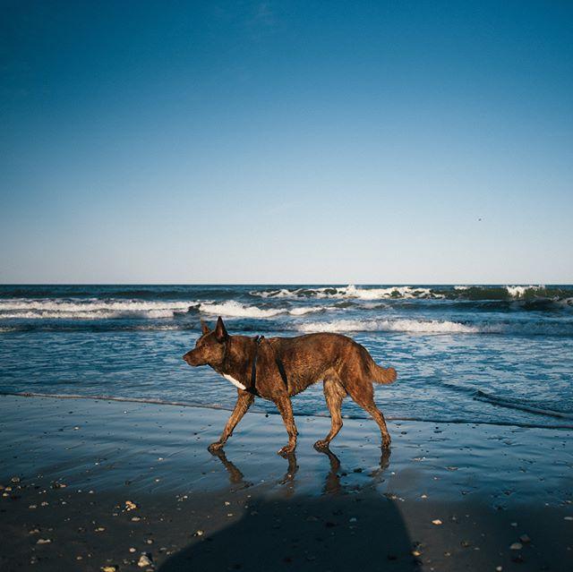 Forever my main squeeze, adventure buddy and spirit animal #dakotanewsom