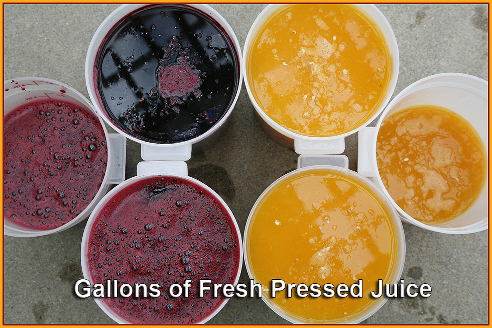 Gallons_of_fresh_juice.jpg
