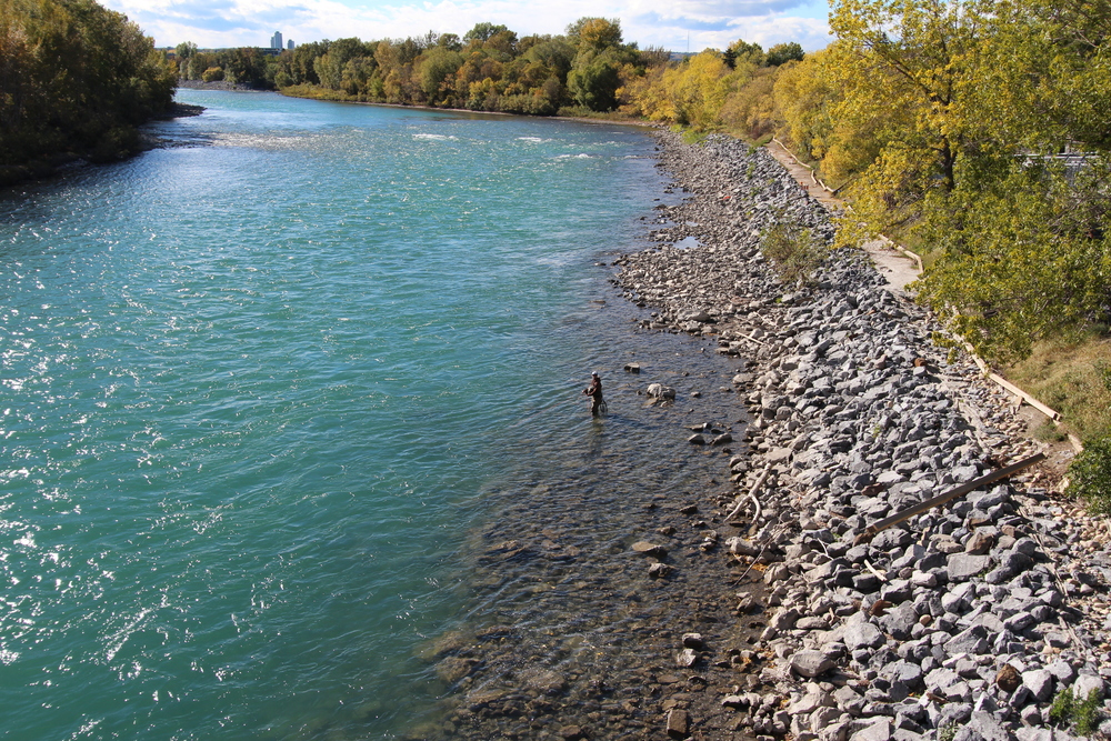 Fly fishing on the Bow river Calgary