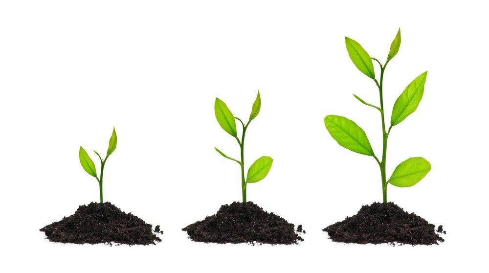 growingtree.jpg