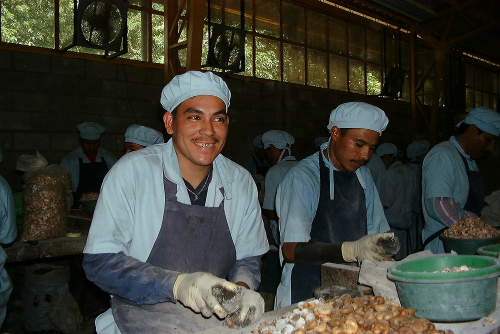 Cashew shelling production plant in El Salvador, Aprainores. Photo credit: Shared Interest