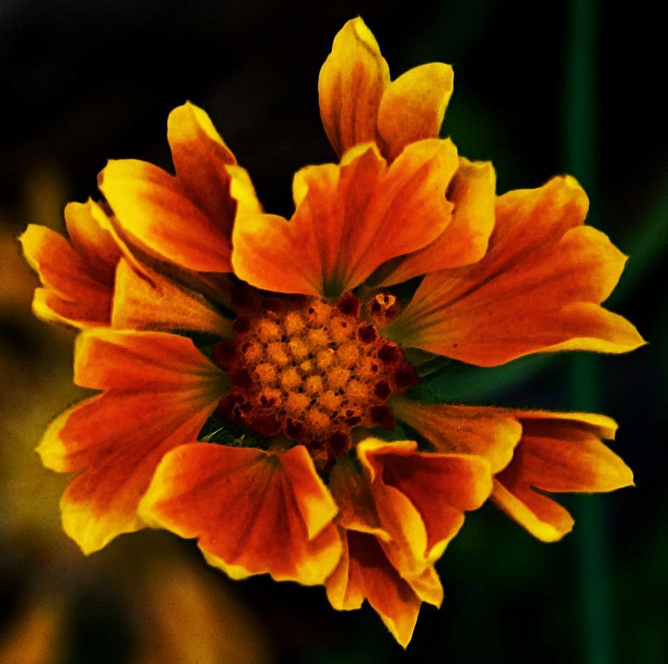 Garden orange flower.jpg