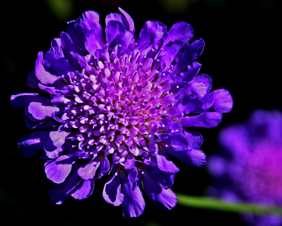 Garden purple flower 01.jpg