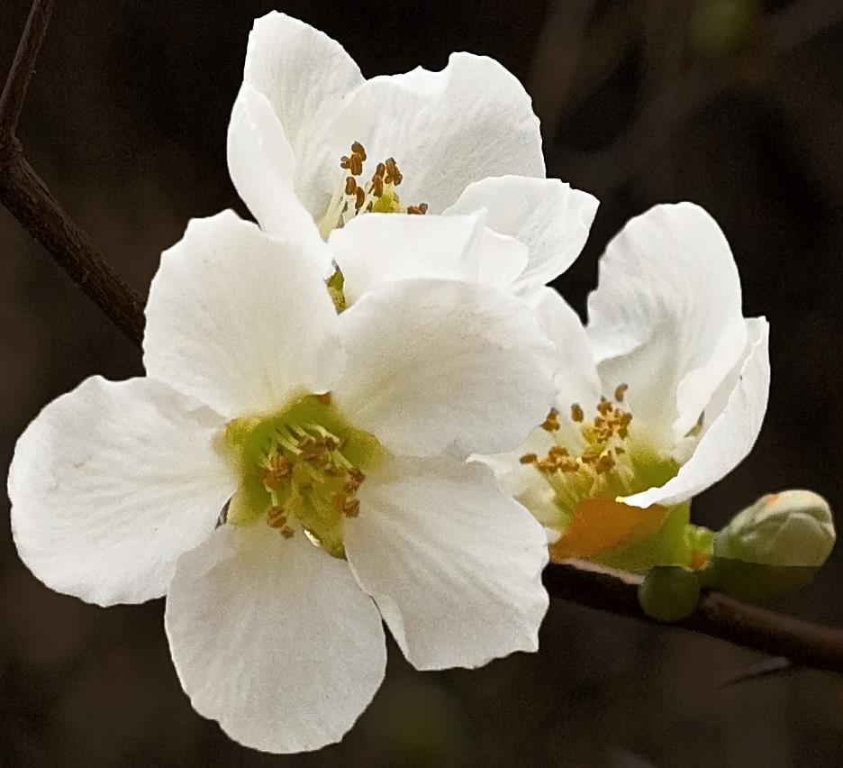 Garden white flower.jpg
