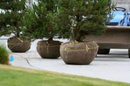 tree shrub installation