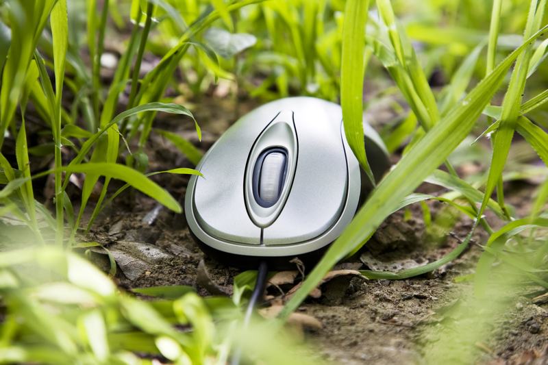 mouse on grass_s_9236861.jpg