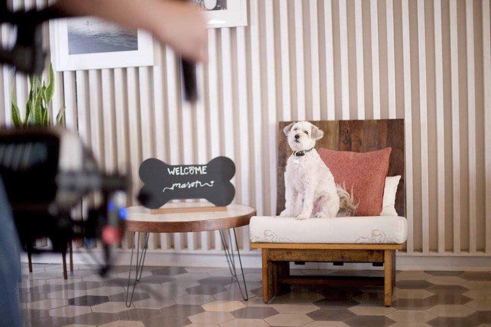 stef-etow-kimpton-dog-5.jpg
