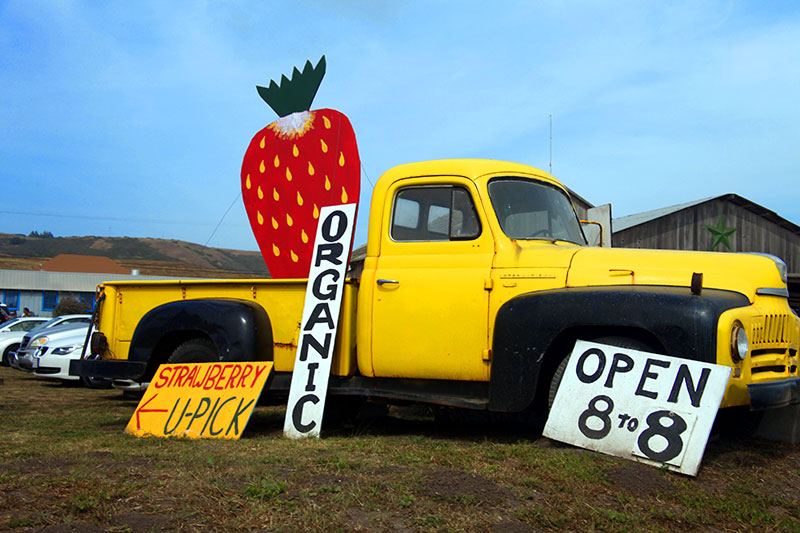 Established California | Adventures | Swanton Berry Farm | Organic Pick Up