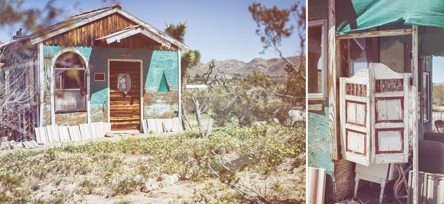 Established California | Adventures | Joshua Tree