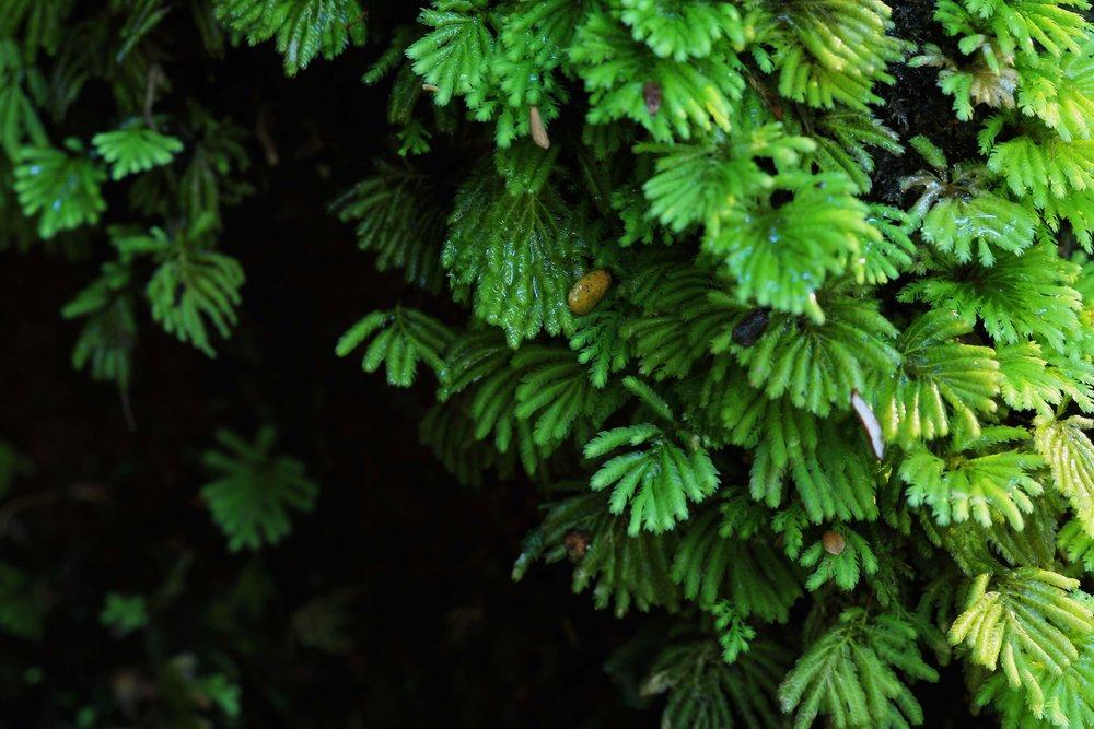 forest.jpg (Arwen Dyer)