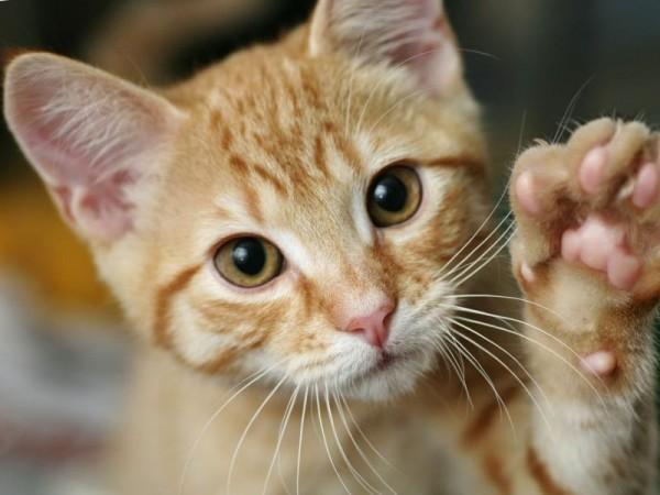 Rote-Katze-Schutzgebuehr.jpg