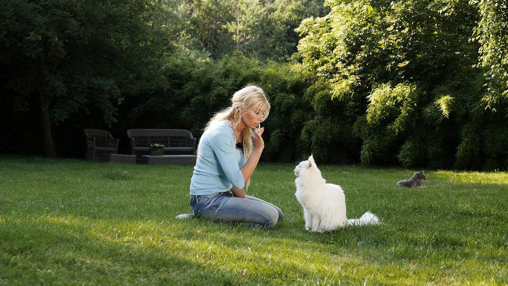 Anette training her deaf maine coon kitten, Phoenix.