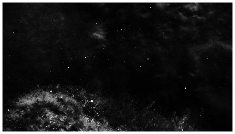 pond nebulae aneelinesorensen--2.jpg