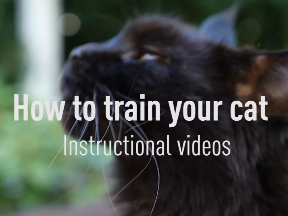 HOW TO TRAIN YOUR CAT Producing 250+ cat training videos for leading animal expert Anette Røpke.
