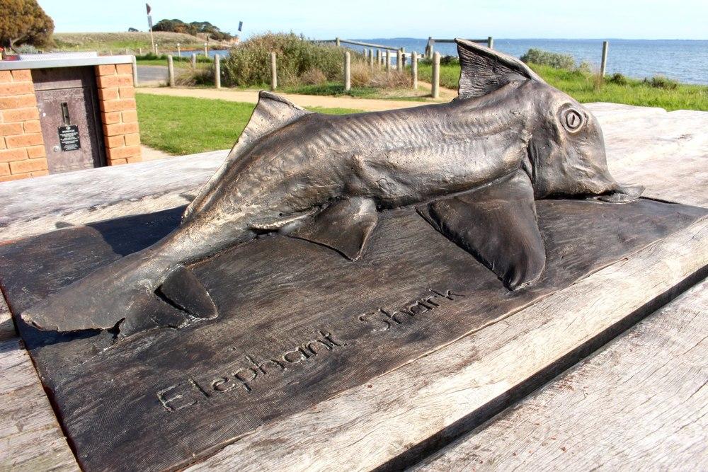 The Elephant Shark