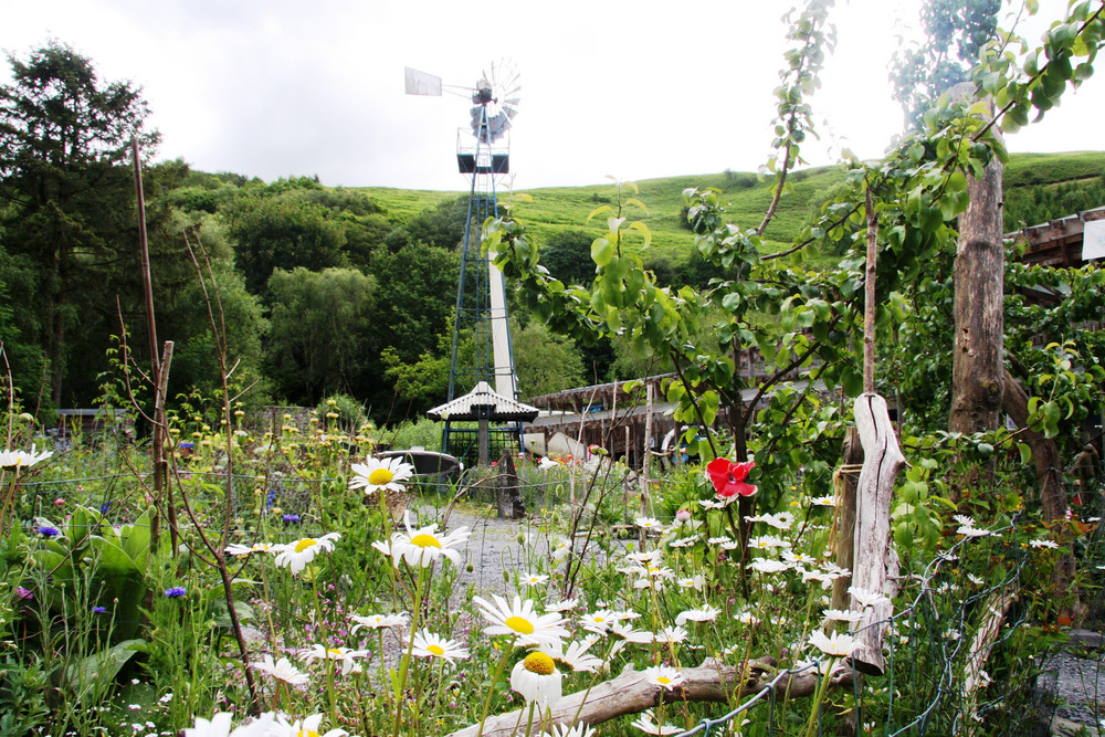 The garden at the Centre for Alternative Technology, Machynlleth