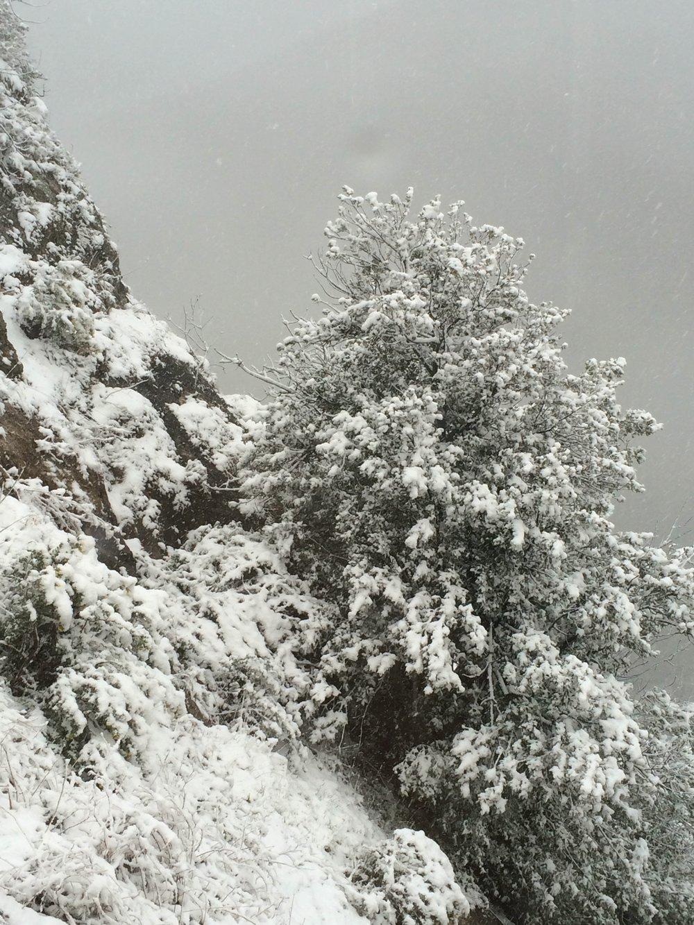neige decembre