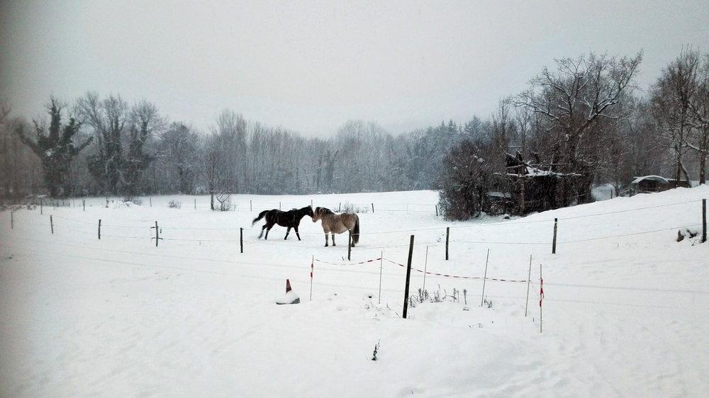 chevaux-neige.jpg