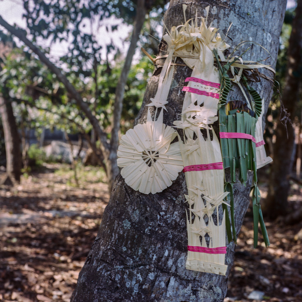 Offering for the tress during Tumpek Bubuh day, a day to paid respect to nature at Tunjuk Village, Bali, Indonesia.
