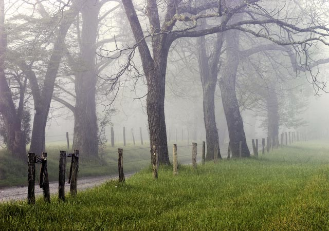 Cade Cove Road in Fog