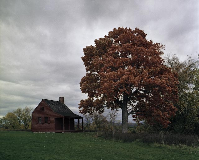 Red House and Maple Tree