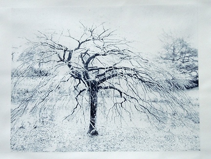 """Weeping Beech II"" by Mary D. Ott"