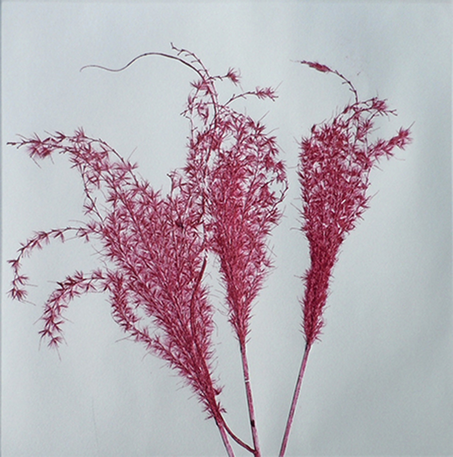 """Dark Magenta Grasses II"" by Mary D. Ott"